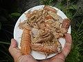 4087Ants Common houseflies foods delicacies of Bulacan 06.jpg