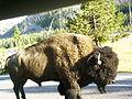 9-22-05 Buffalo.jpg