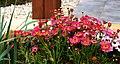 A@a my garden - panoramio (3).jpg