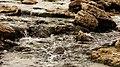 AGUAS FRESCAS DEL ARROYO QUEBRACHO - panoramio.jpg