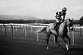 AP McCoy Black & White Horse Racing Photo (3910559910).jpg