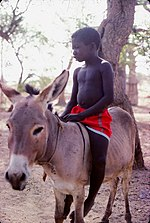 ASC Leiden - W.E.A. van Beek Collection - Dogon daily life 04 - Dogon boy on a donkey, Tireli, Mali 1980.jpg
