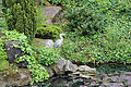 A Grey heron on Crematorium pond at the City of London Cemetery 03.jpg