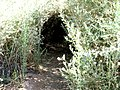 A Tunnel in the Dense Vegetation - panoramio.jpg
