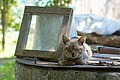 A cat in Ubezhenskaya, 2012-06-21.jpg