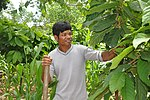 A farmer is learning to profit from cocoa in Dak Lak Province of central Vietnam. (5071423006).jpg