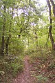 A footpath in Clowes Wood, near a Tumulus - geograph.org.uk - 1520874.jpg