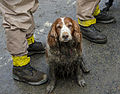 A search dog waits by the feet of U.S. Service members with the Washington National Guard to be washed after working in a debris field created in the aftermath of a mudslide in Oso, Wash., March 27, 2014 140327-Z-ZZ999-012.jpg
