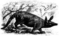 Aardvark Mivart.png