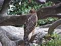 Ab bird 012.JPG