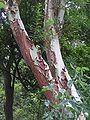 Ab plant 06.jpg