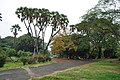 Acharya Jagadish Chandra Bose Indian Botanic Garden - Howrah 2011-02-20 1585.JPG
