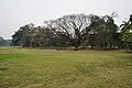 Acharya Jagadish Chandra Bose Indian Botanic Garden - Howrah 2011-02-20 1659.JPG