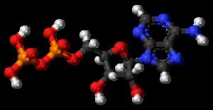 Adenosine diphosphate - Image: Adenosine diphosphate 3D balls