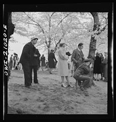 Admiring the cherry blossoms 8d27137v.jpg