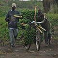 Africa0703-0907a - Flickr - Dave Proffer.jpg