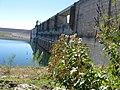 Ageratina Havanensis, Shrubby Boneset - panoramio.jpg