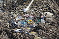 Albatross carcass and marine debris.jpg