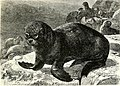 All about animals. Facts, stories and anecdotes (1900) (14777754612).jpg