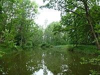 Altwasserteich im Neugeschüttwörth bei Gremheim.JPG