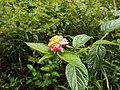 Andasibe-Mantadia National Park 2013 44.jpg