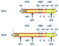 Androgen receptor sequence.png