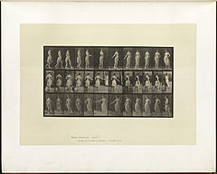 Animal locomotion. Plate 53 (Boston Public Library).jpg