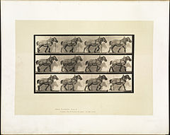 Animal locomotion. Plate 565 (Boston Public Library).jpg