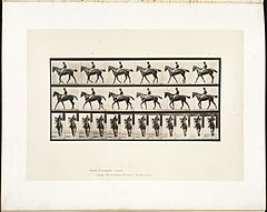 Animal locomotion. Plate 580 (Boston Public Library).jpg