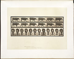 Animal locomotion. Plate 671 (Boston Public Library).jpg