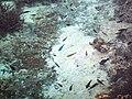 Aquarium naturel de l'île de Maré.jpg