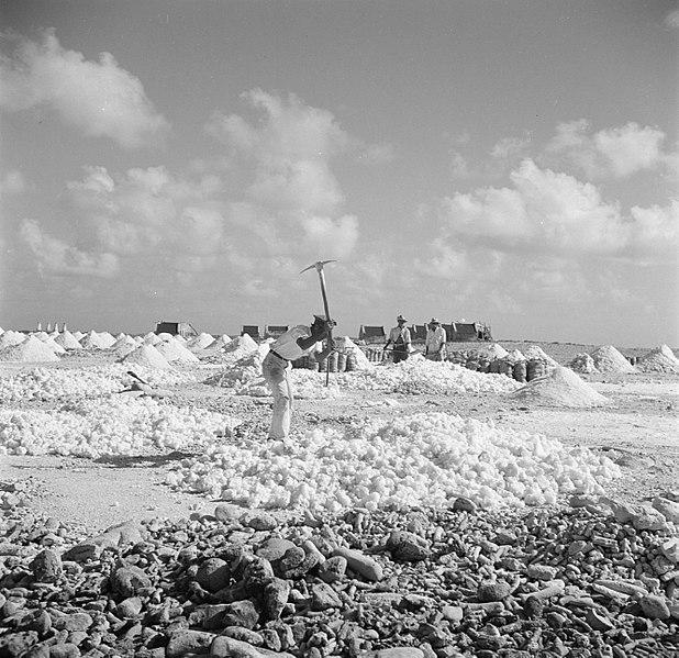 File:Arbeiders aan het werk in de zoutpannen op Bonaire, Bestanddeelnr 252-8399.jpg