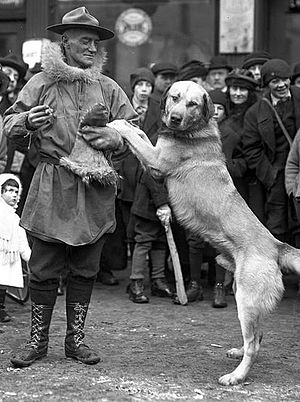 Chinook (dog) - Arthur T. Walden and Chinook, 1922
