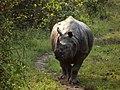 Asian One Horned Rhino.jpg