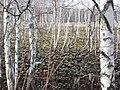 Asinovsky District, Tomsk Oblast, Russia - panoramio (299).jpg