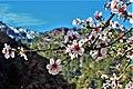 Atlas spring.jpg