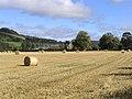 Autumn harvest field - geograph.org.uk - 575891.jpg