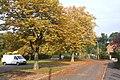 Autumn tints developing, Wilburton - geograph.org.uk - 581569.jpg