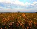 Autumn wildflowers (6175853651).jpg
