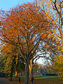 Autumnal Sutton Green, SUTTON, Surrey, Greater London (4).jpg