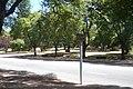 Avenida Doctor Luis Morquio - panoramio.jpg