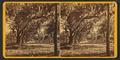 Avenue in Bonaventure, by Ryan, D. J., 1837-.png
