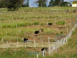 Fazenda de avestruz em Avaré
