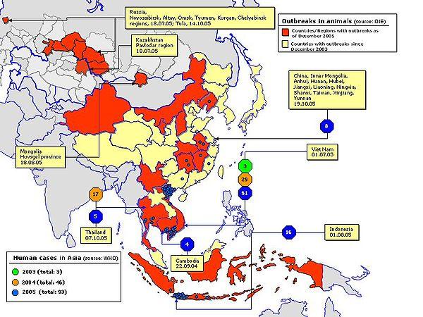 Regret, Asian avian flu confirm