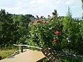 Başdeğirmenler (bahçe) - panoramio.jpg