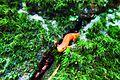 Baby Salamander.JPG