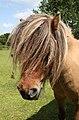 Bad hair day - Flickr - exfordy (1).jpg