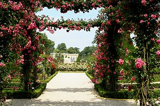 Rose garden - Parc de Bagatelle in Paris