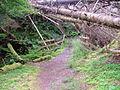 Balmacara Woodland Walk - geograph.org.uk - 512264.jpg