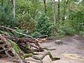 Barrier in the Hambach forest 16.jpg